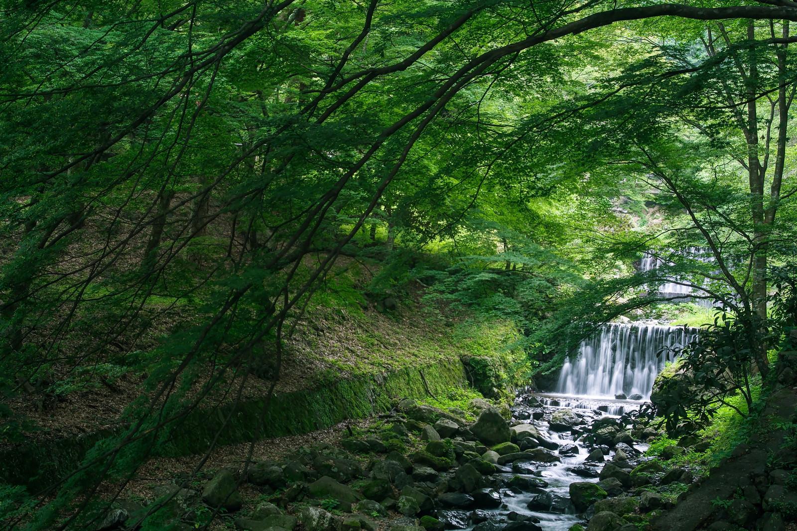 「新緑の木々の下を流れる渓流」の写真