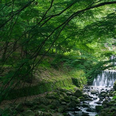 新緑の木々の下を流れる渓流の写真