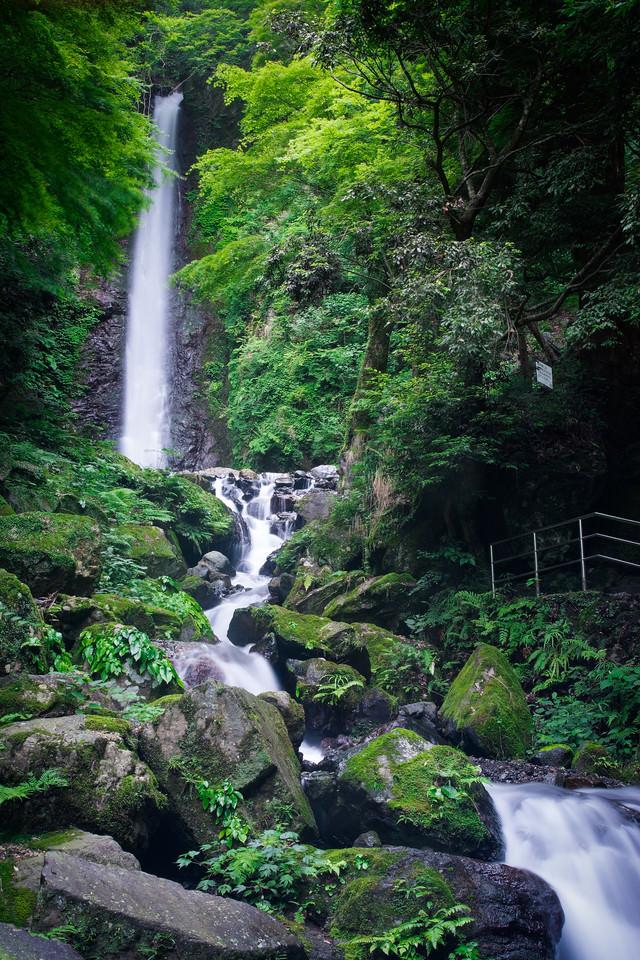 緑に囲まれた養老の滝の写真