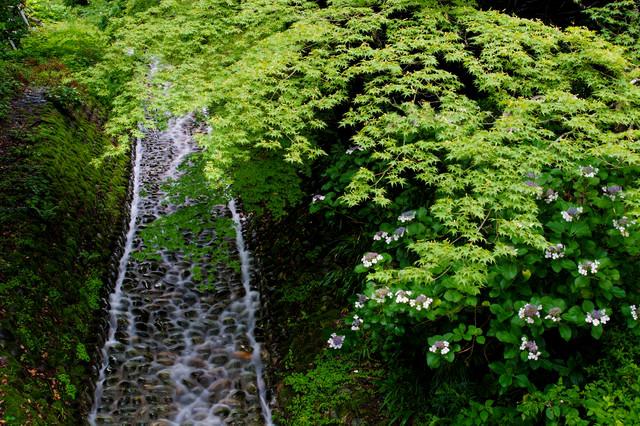 苔むす川原を流れる水の写真
