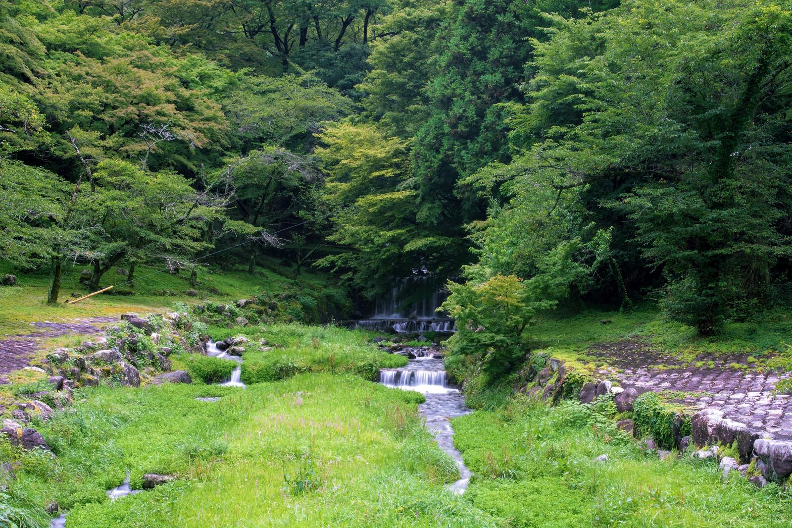 「新緑の森から続く小川」の写真