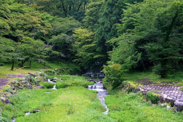 新緑の森から続く小川の写真