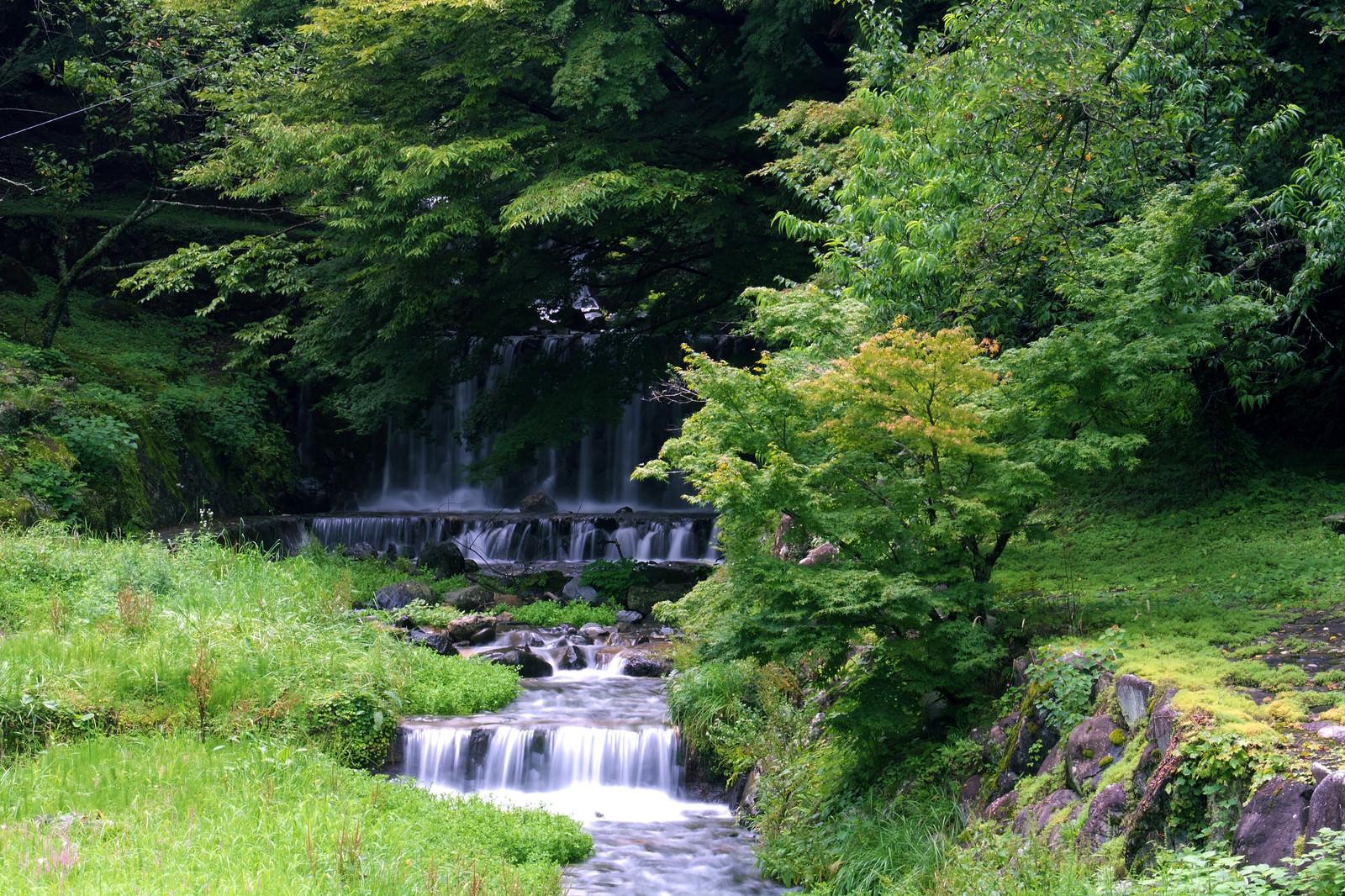 「新緑の森から流れ落ちる滝」の写真