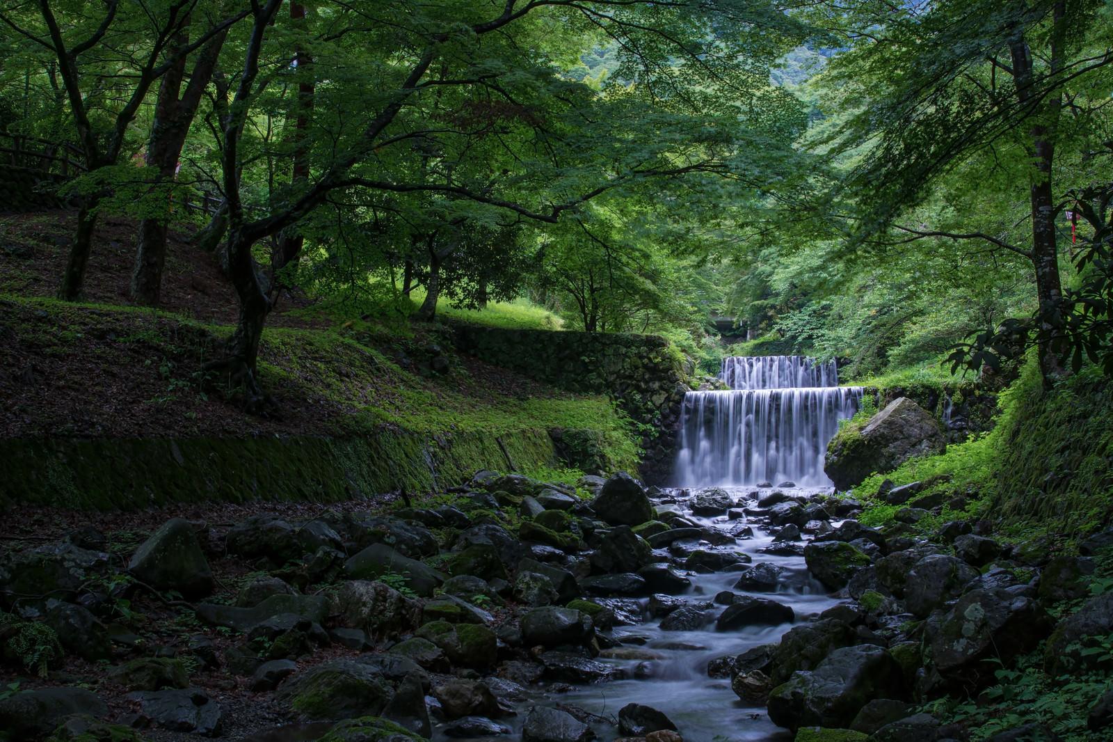 「滝谷の河原で新緑に包まれる」の写真