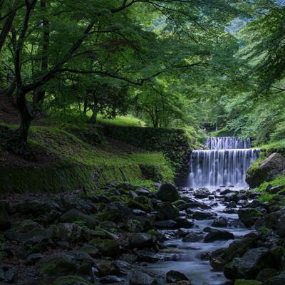 滝谷の河原で新緑に包まれるの写真
