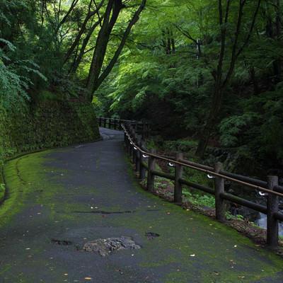 苔生す歩道沿いを流れる小川の写真