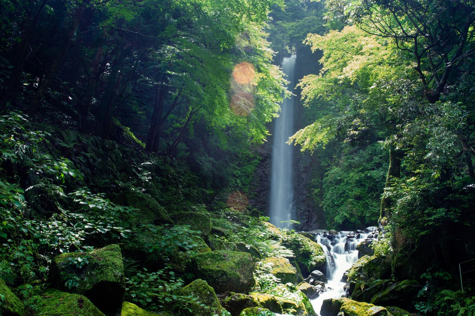 「梅雨の晴れ間の日差しに輝く木々の緑」の写真