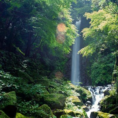 梅雨の晴れ間の日差しに輝く木々の緑の写真