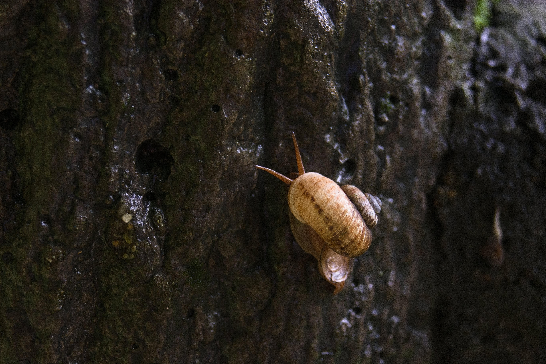の 特徴 の カタツムリ 殻