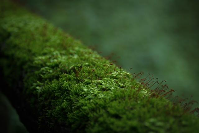 遊歩道の手すりをびっしりと埋め尽くす苔の写真