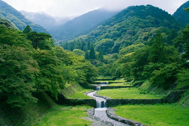 新緑の森から段々に流れる小川の写真