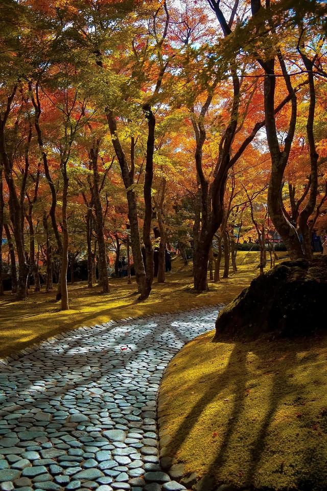 黄葉した小道の写真