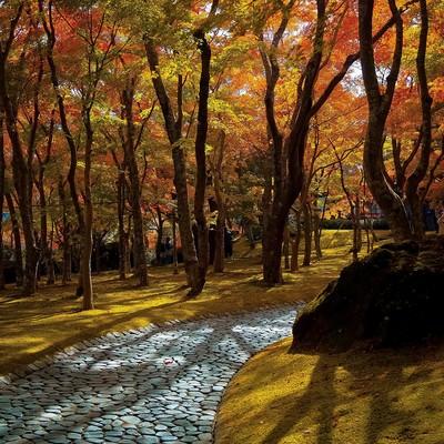 「紅葉した小道」の写真素材