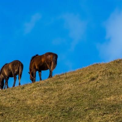 「寒風の中草を食む馬」の写真素材