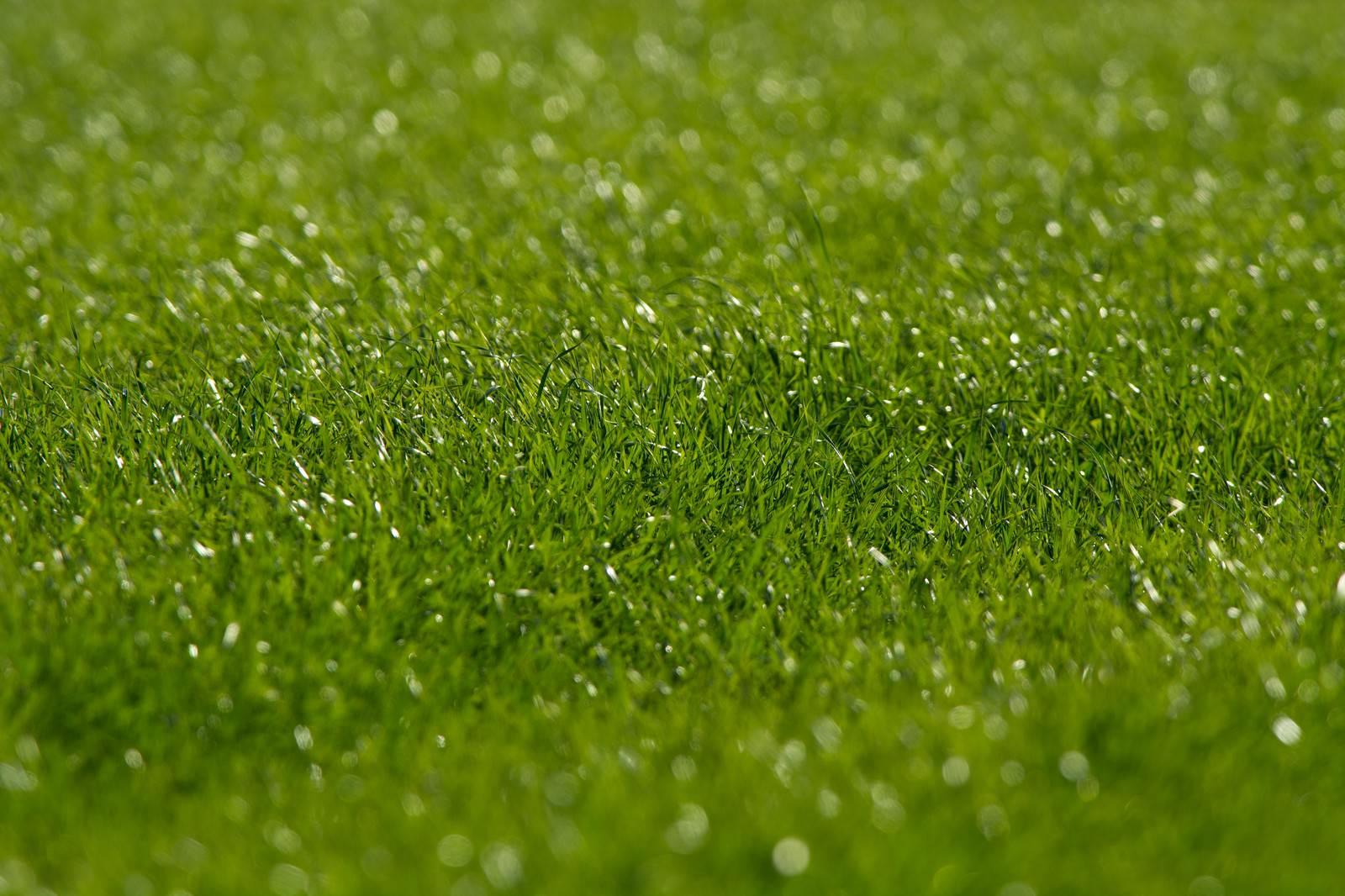 「生き生きとした牧草地」の写真