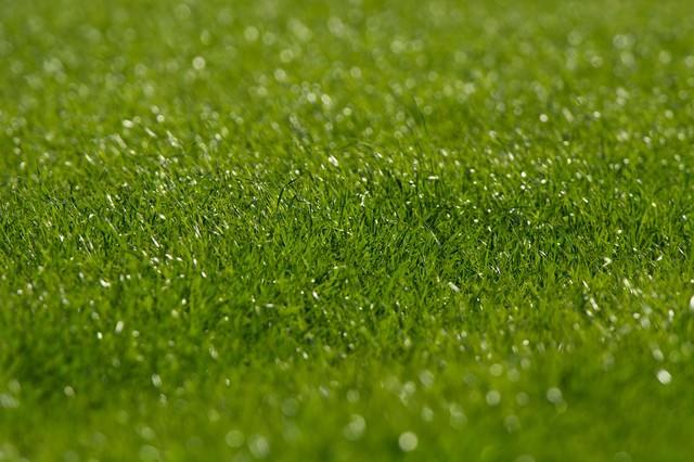 生き生きとした牧草地の写真