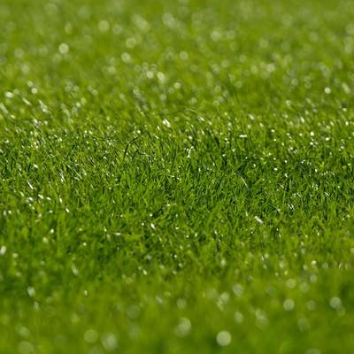 「生き生きとした牧草地」の写真素材