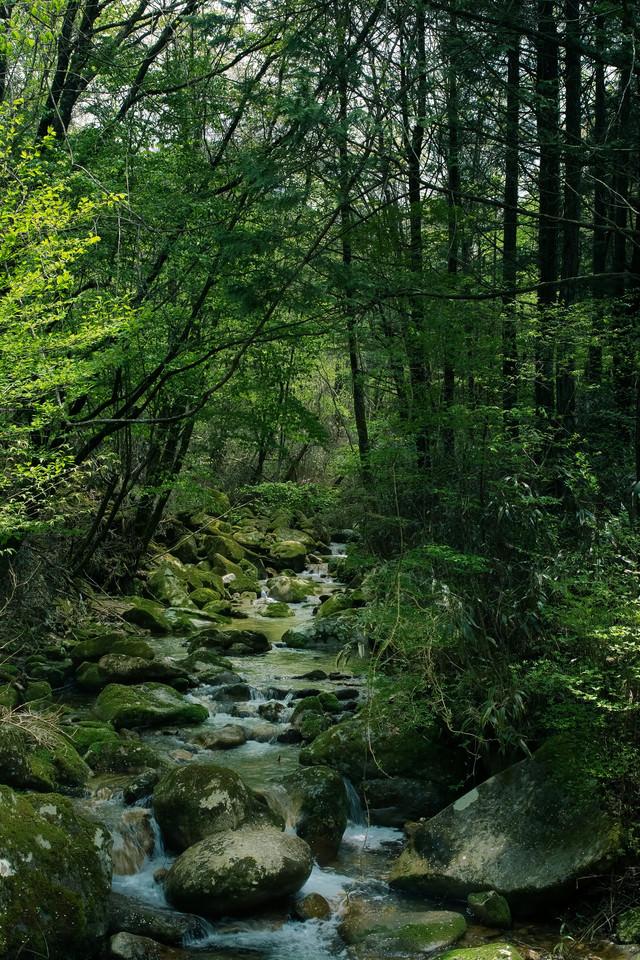 矢作川水源の森(長野県根羽村)の写真