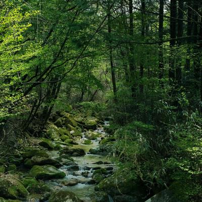 「矢作川水源の森(長野県根羽村)」の写真素材
