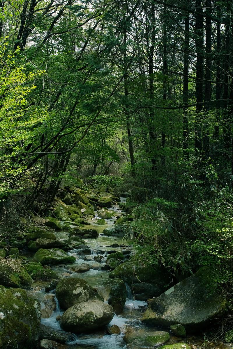 「矢作川水源の森(長野県根羽村)矢作川水源の森(長野県根羽村)」のフリー写真素材を拡大