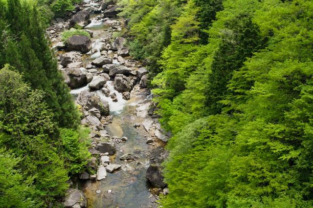 初夏の小戸名渓谷(長野県根羽村)の写真