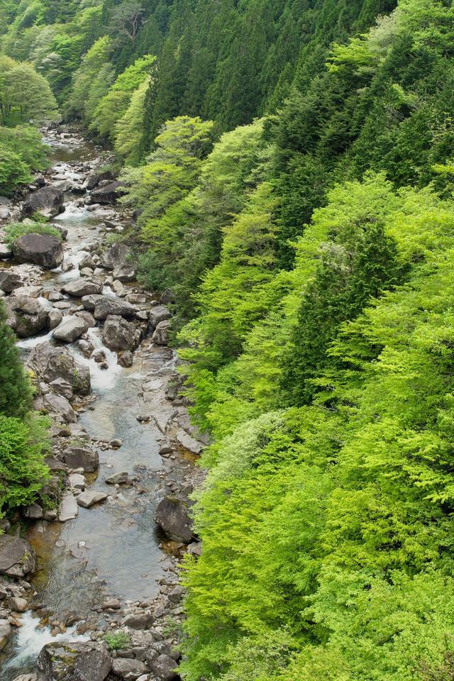 新緑に囲まれた渓流-小戸名渓谷(長野県根羽村)の写真