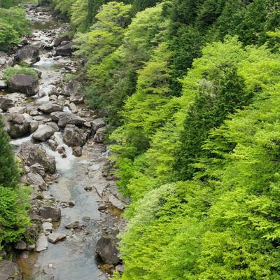 「新緑に囲まれた渓流-小戸名渓谷(長野県根羽村)」の写真素材