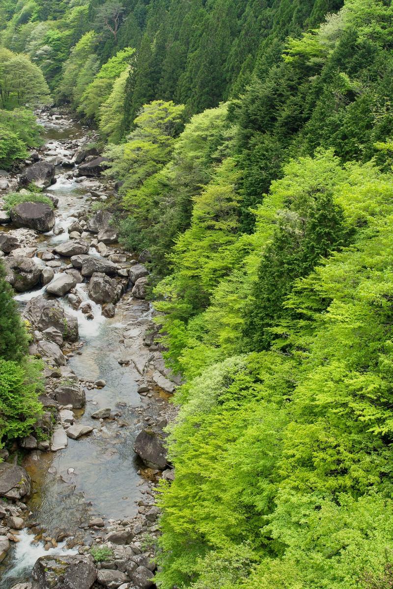 「新緑に囲まれた渓流-小戸名渓谷(長野県根羽村)」の写真