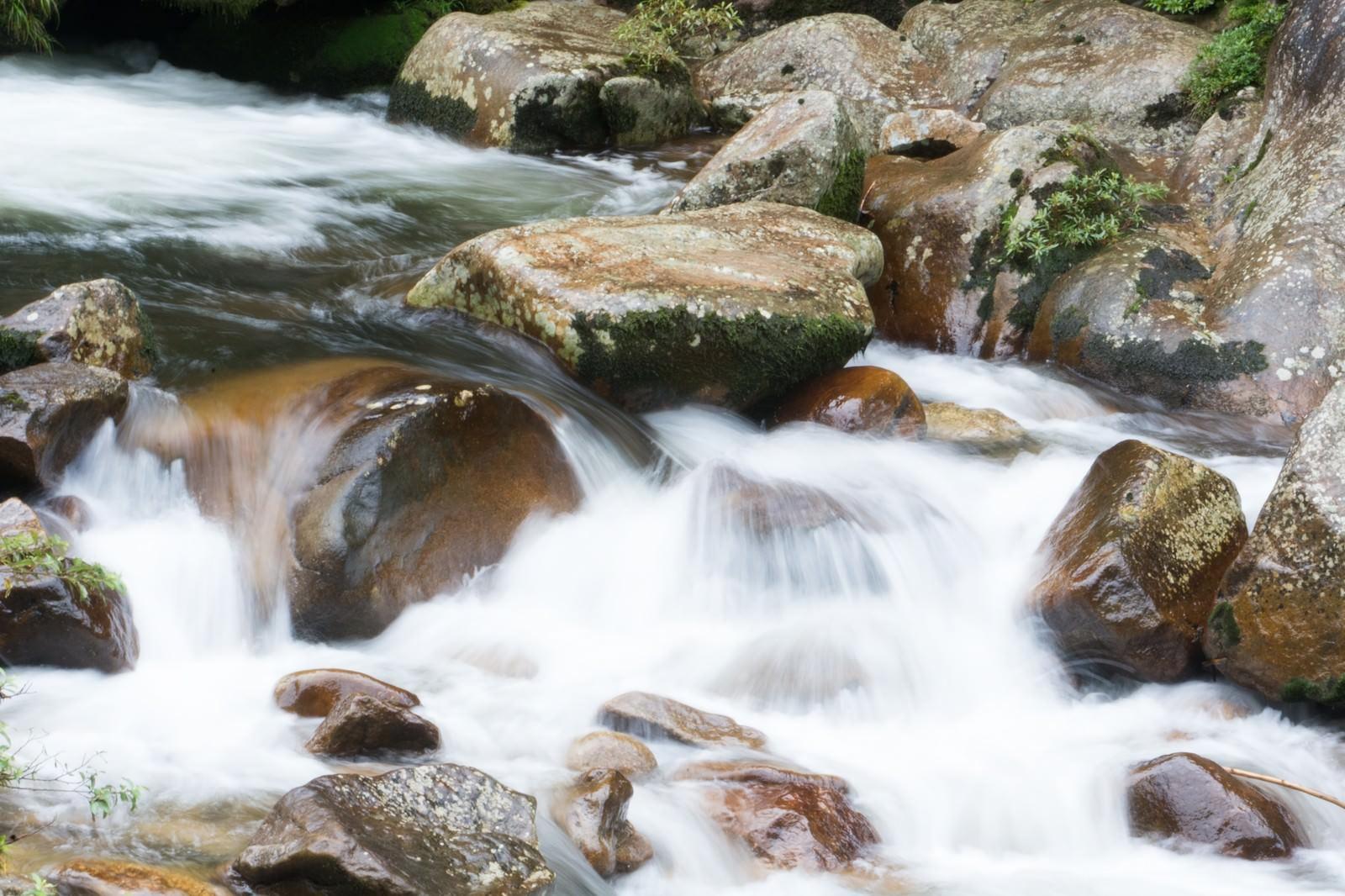 「渓流に遊ぶ」の写真