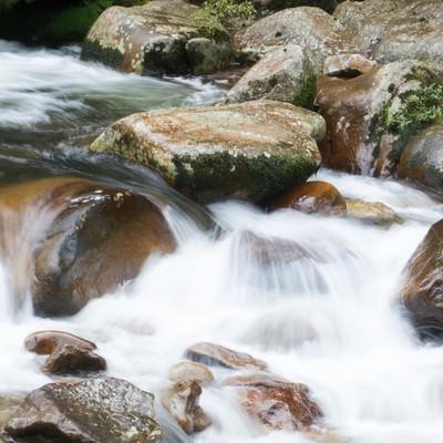 渓流に遊ぶの写真
