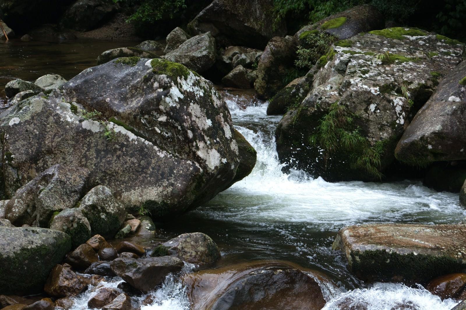 「雨に濡れた渓流」の写真