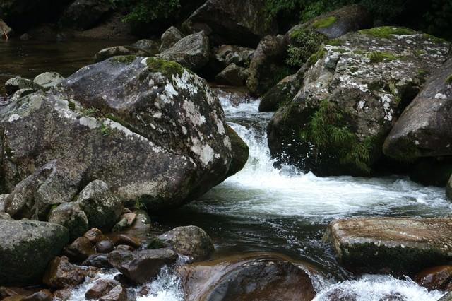 雨に濡れた渓流の写真
