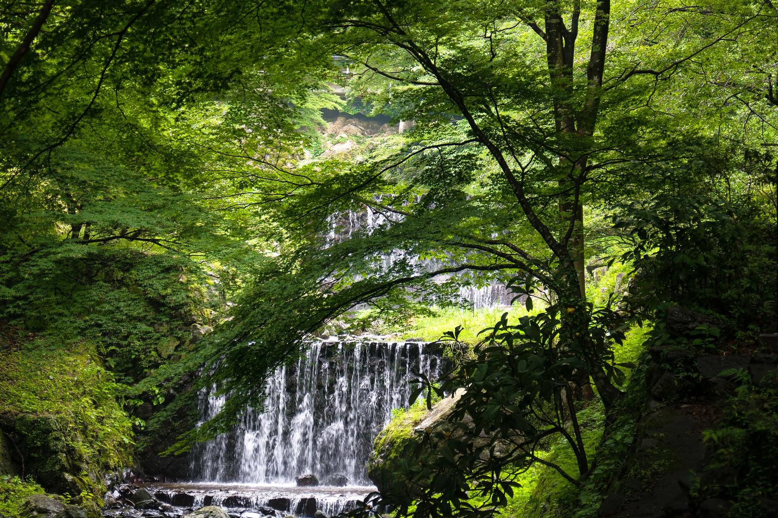 「養老の滝へと向かう道から見える新緑に囲まれたせせらぎ」の写真