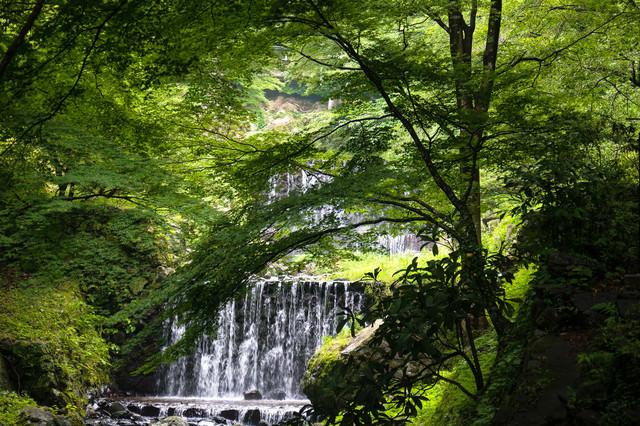 養老の滝へと向かう道から見える新緑に囲まれたせせらぎの写真