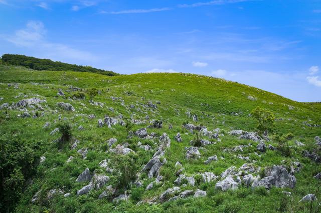 なだらかな斜面に無数の石灰岩が並ぶ秋吉台(山口県美祢市)の写真