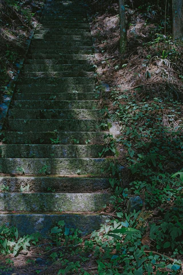 木漏れ日の階段の写真