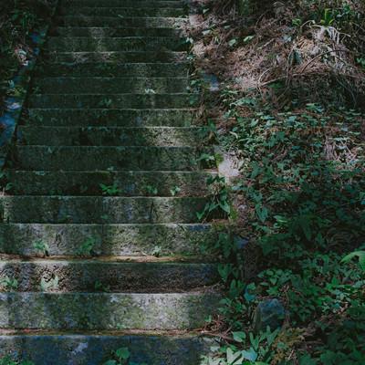 「木漏れ日の階段」の写真素材