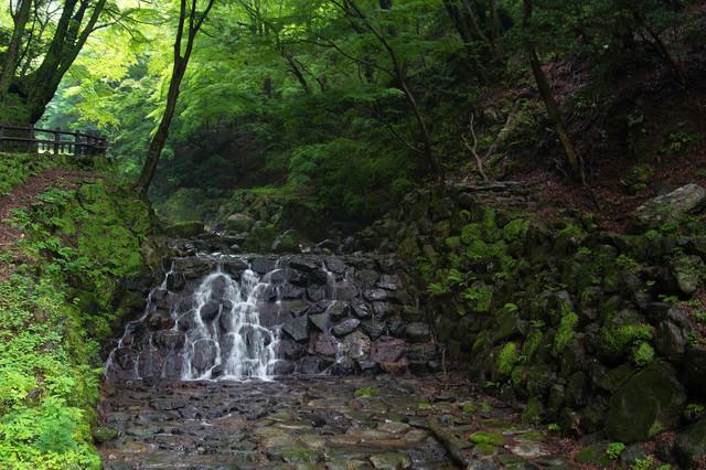 新緑を流れる川の写真