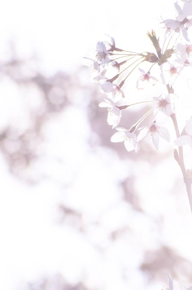 まばゆい春の訪れの写真