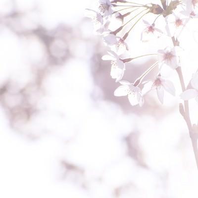 「まばゆい春の訪れ」の写真素材