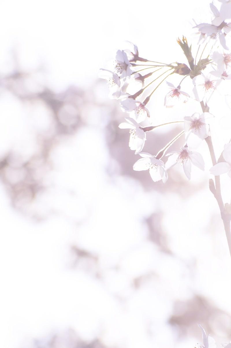 「まばゆい春の訪れ」の写真