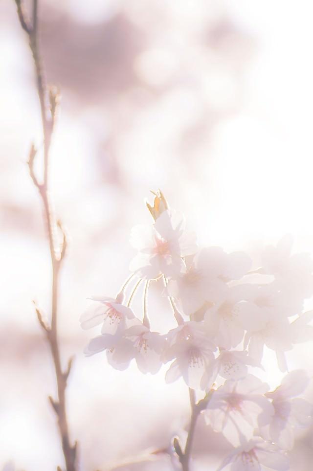 春の夢の写真