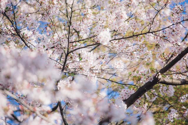 葉桜の写真