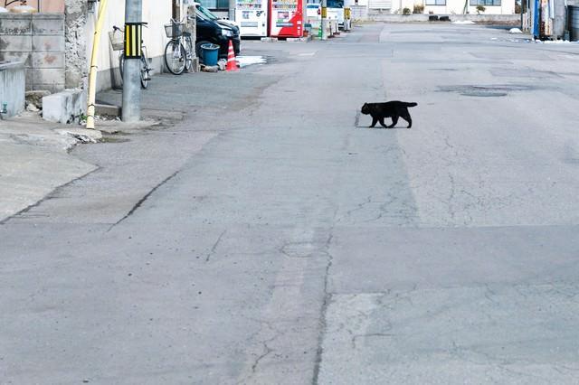 横切る黒猫の写真