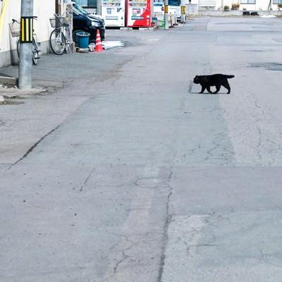 「横切る黒猫」の写真素材