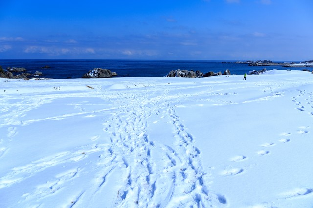 雪の種差海岸の写真