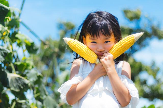 トウモロコシ畑と女の子の写真