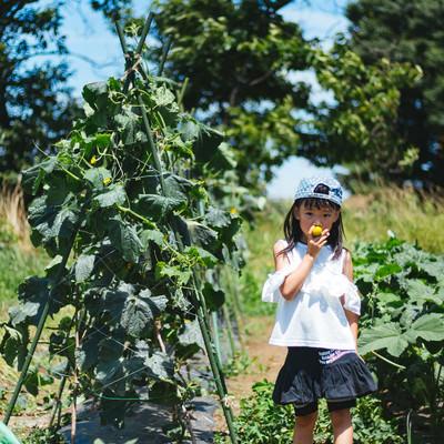畑と女の子の写真