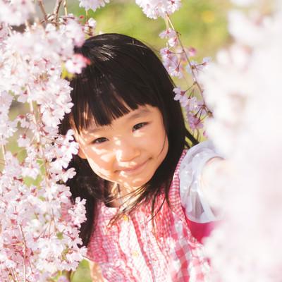 桜色の女の子の写真