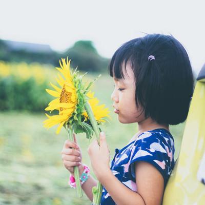 向日葵と幼い女の子の写真